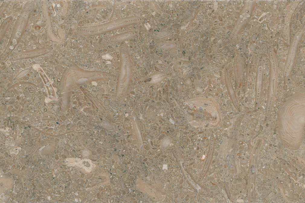 Fossil Limestone - polished
