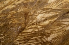 Giallo Moicano - polished