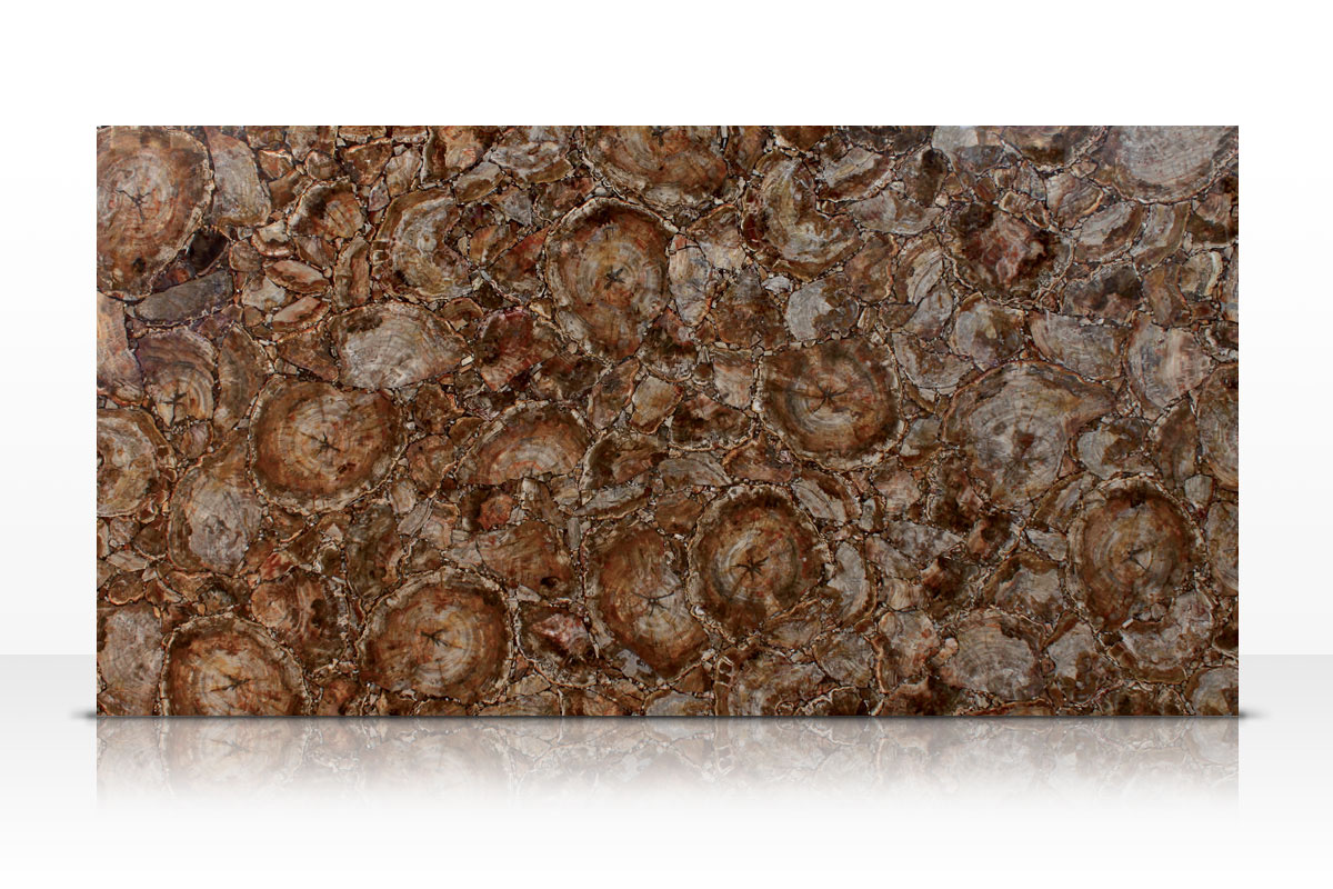 Brown Petrified Wood Slab Granite Marble Travertine